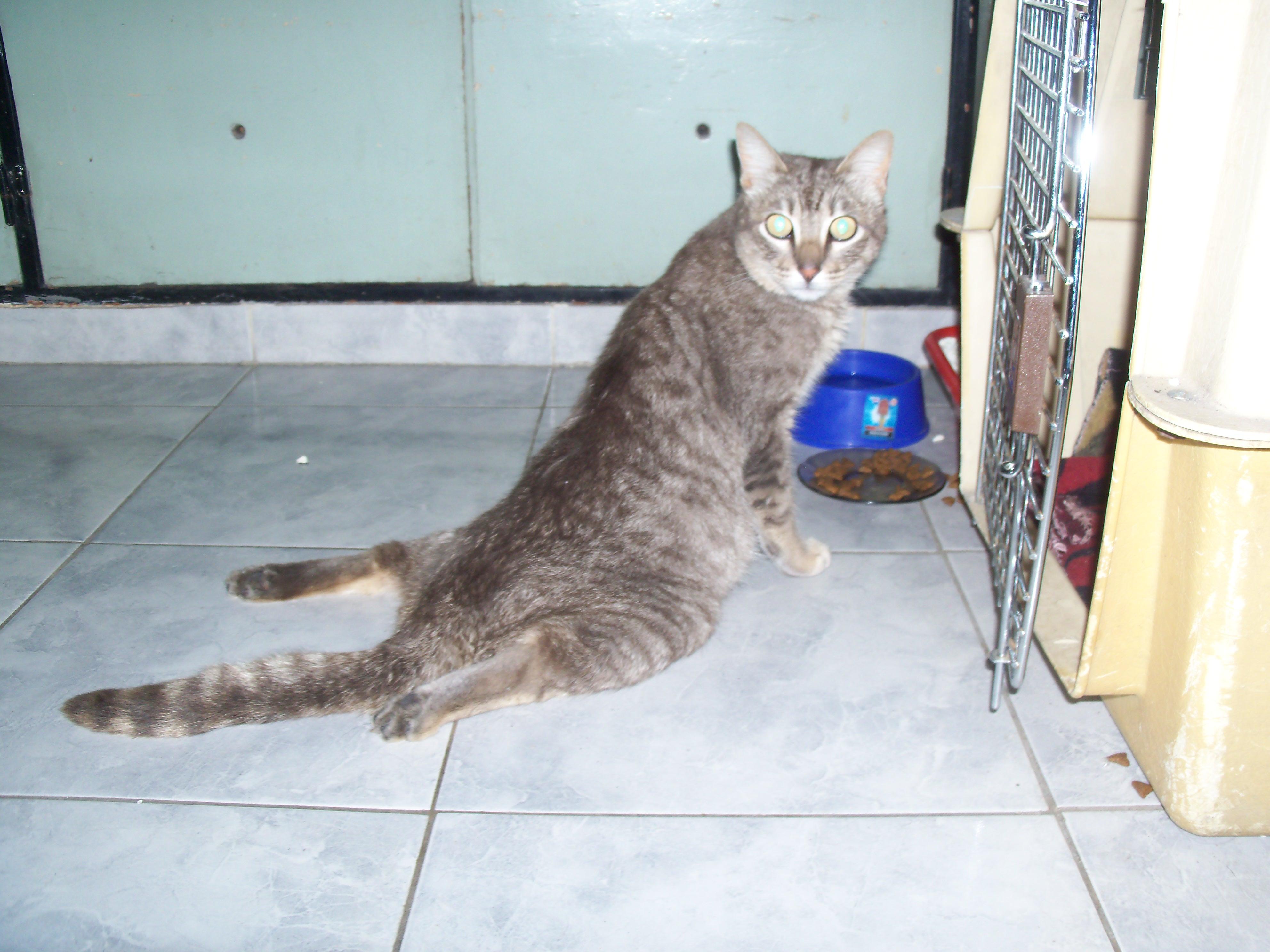 Diana nuestra querida gata que  salvo a muchos de sus congeneres