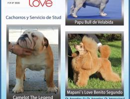 Mapani's Love