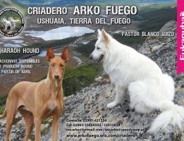 Arko Fuego