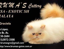 Bruma's Cattery