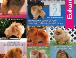 Patagonic Pomeranians