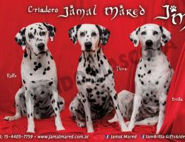 Criadero Jamal Mared