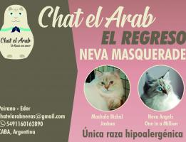 Chat el Arab
