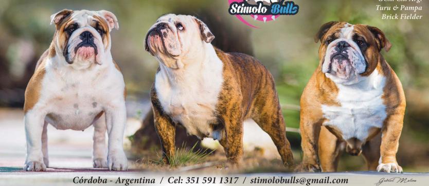 Stimolo Bulls