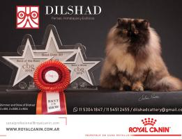 Dilshad cattery