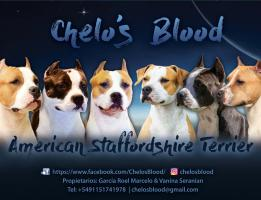 Chelo's Blood