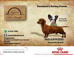 kennel Cani Lunghi