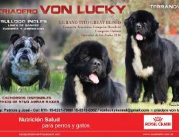 Von Lucky