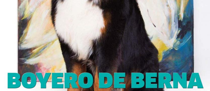 Boyero de Berna Club Argentino