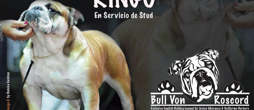 Bull Von Roscord