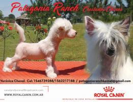 Patagonia Ranch
